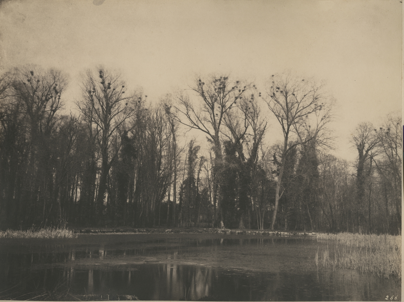 """Eugène CUVELIER (French, 1837-1900) """"Parc de Courances, nids de corbeaux"""", 1860s Salt print 25.4 x 33.6 cm, mounted Numbered """"266"""" in the negative. Titled in pencil on mount."""