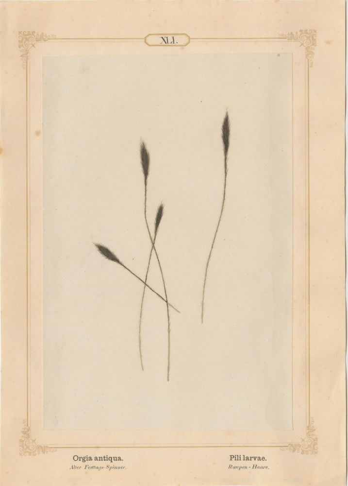 """Ernst HEEGER (Austrian, 1783-1866) """"Epeira diadema. Pili abdominis."""" Araneus diadematus. (Brush-like hairs of abdomen of cross orb-weaving spider), 1861 Hand colored salt print from a glass negative 20.2 x 13.4 cm mounted on 26.0 x 18.5 cm sheet  Numbered in ink with printed titles in Latin and German on mount"""