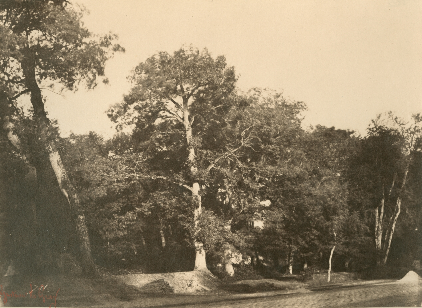 """Gustave LE GRAY (French, 1820-1884) """"Le Hêtre, Fontainebleau""""*, early 1850s Albumen or coated salt print from a waxed paper negative 20.0 x 27.2 cm mounted on 41.7 x 56.8 cm paper Numbered """"721"""" in the negative. Photographer's red signature stamp. Titled with """"No 721"""" in pencil, and """"721"""" in ink, with photographer's oval blindstamp on the mount."""