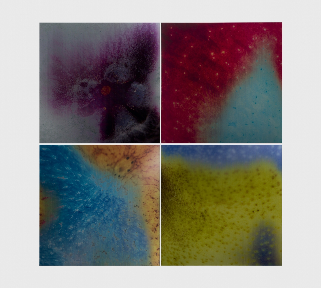 grid of four colorful lenticular prints of details of the skin of fruit
