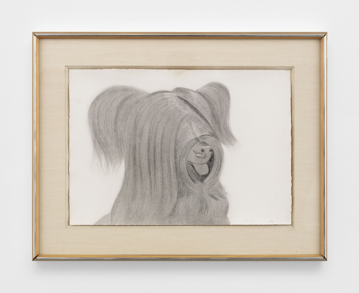 Framed aquatint/drypoint drawing of a dog with shaggy long hair covering its eyes and featuring its tongue sticking out