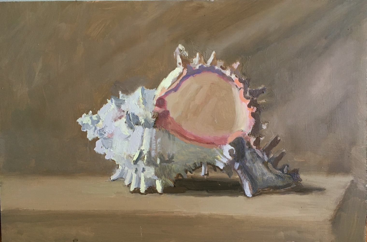 """Shell  9"""" x 13.5""""  Oil On Panel"""