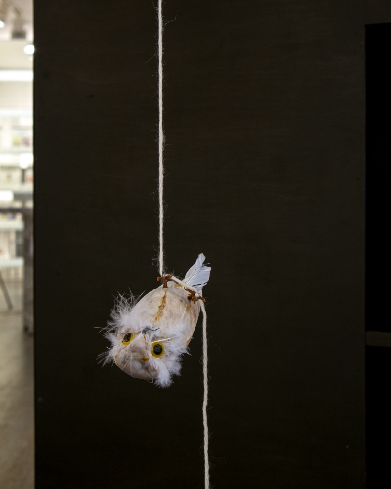 Alix Pearlstein, Hanging Snowy Owl (after Hanging Bird), 2021