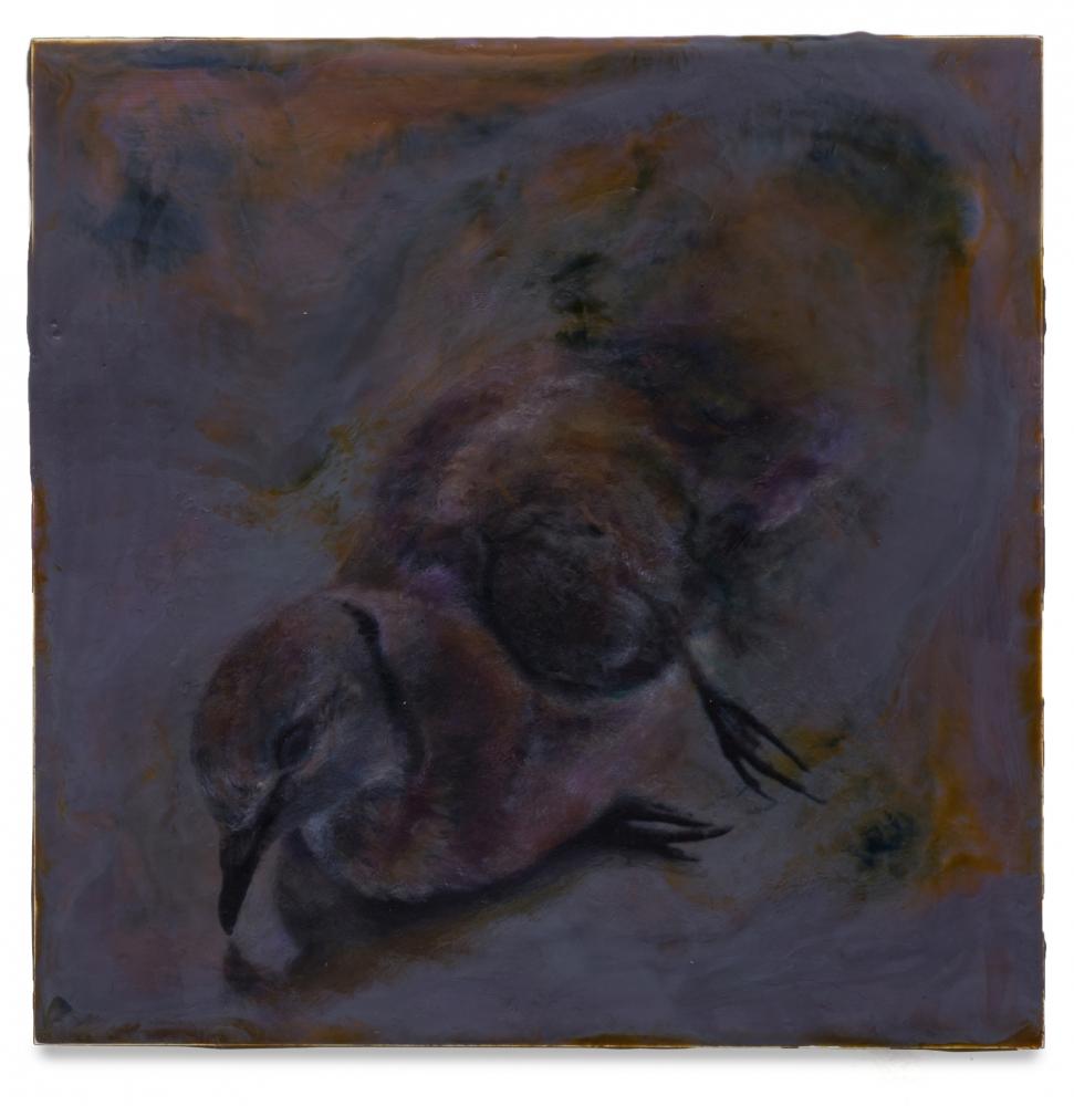 Noel Grunwaldt Dove 2016-17