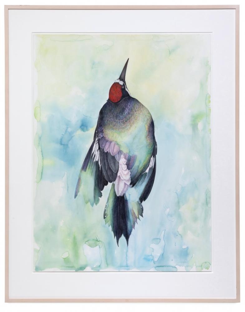 Noel Grunwaldt Acorn Woodpecker 2010