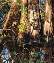 Adrian Deckbar: A Journey Into The Natural World