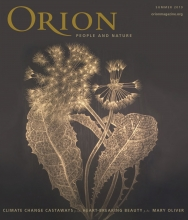 Orion Magazine Behind the Cover: Margot Glass, Dandelion