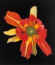 Manic Botanic Exhibition Catalog