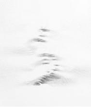 Malba- artistas contemporáneos 31: Julian Terán