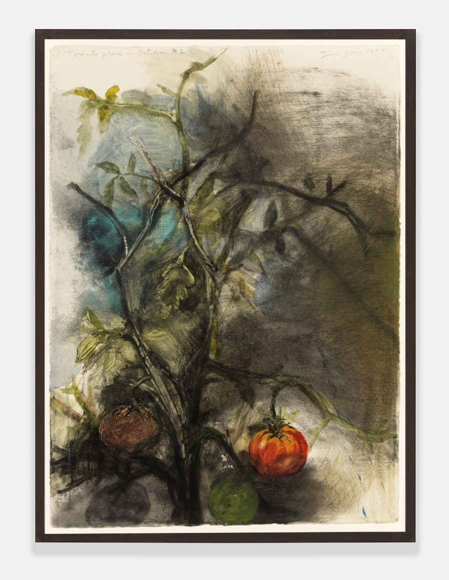 Tomato Plant in October, #2, 1993, Charcoal, pastel and watercolor on paper
