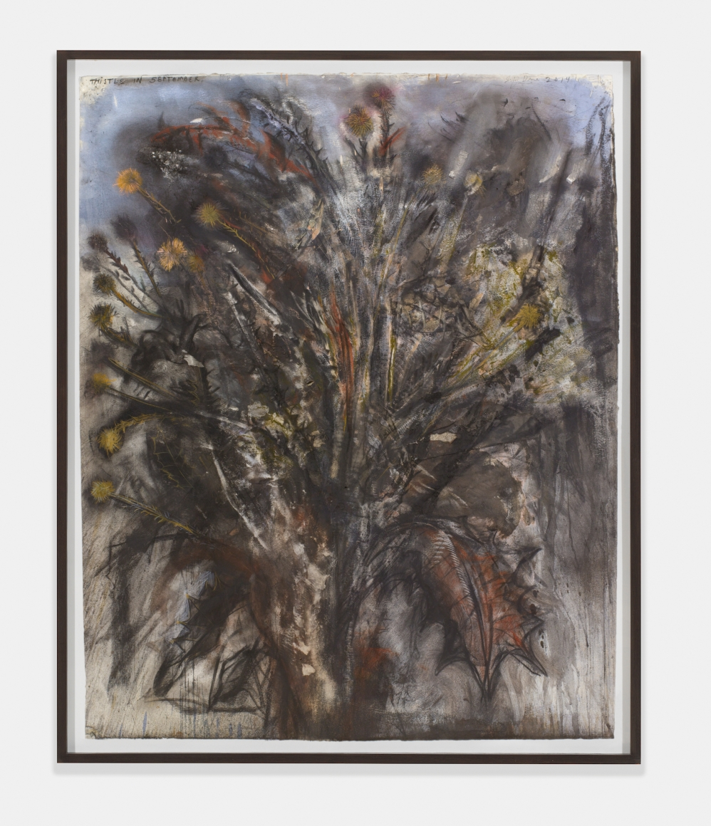 Thistle in September, 2014, Charcoal, pastel and watercolor on paper