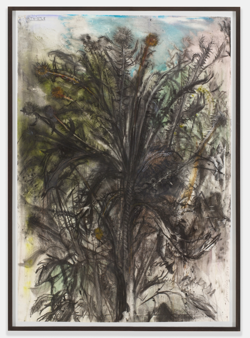 Thistle, 2014, Charcoal, pastel and watercolor on paper