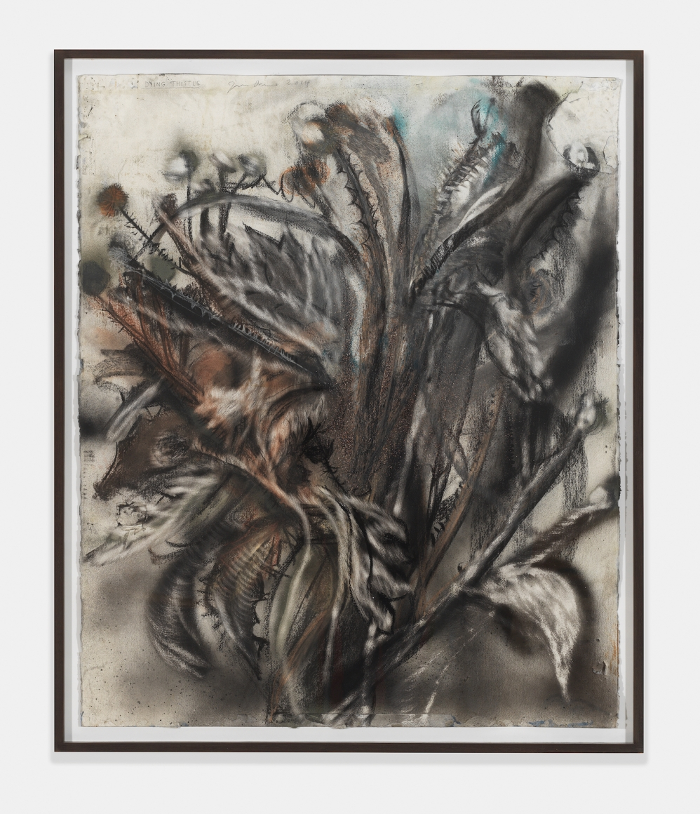 Dying Thistle, 2014, Charcoal, pastel and watercolor on paper