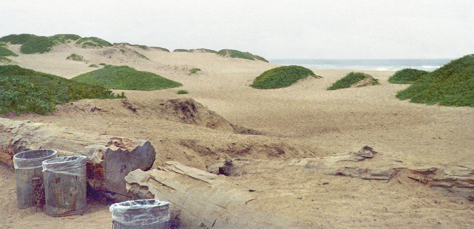 JÖRG SASSE, 3019, 1998