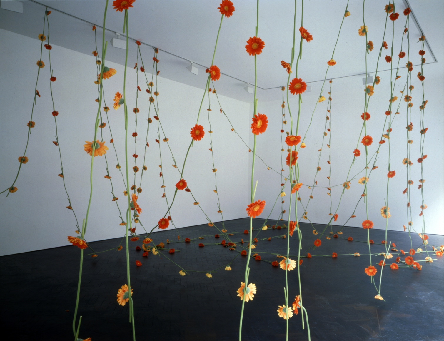 head over heals, 1995, 365 orange gerbera threaded into a chain