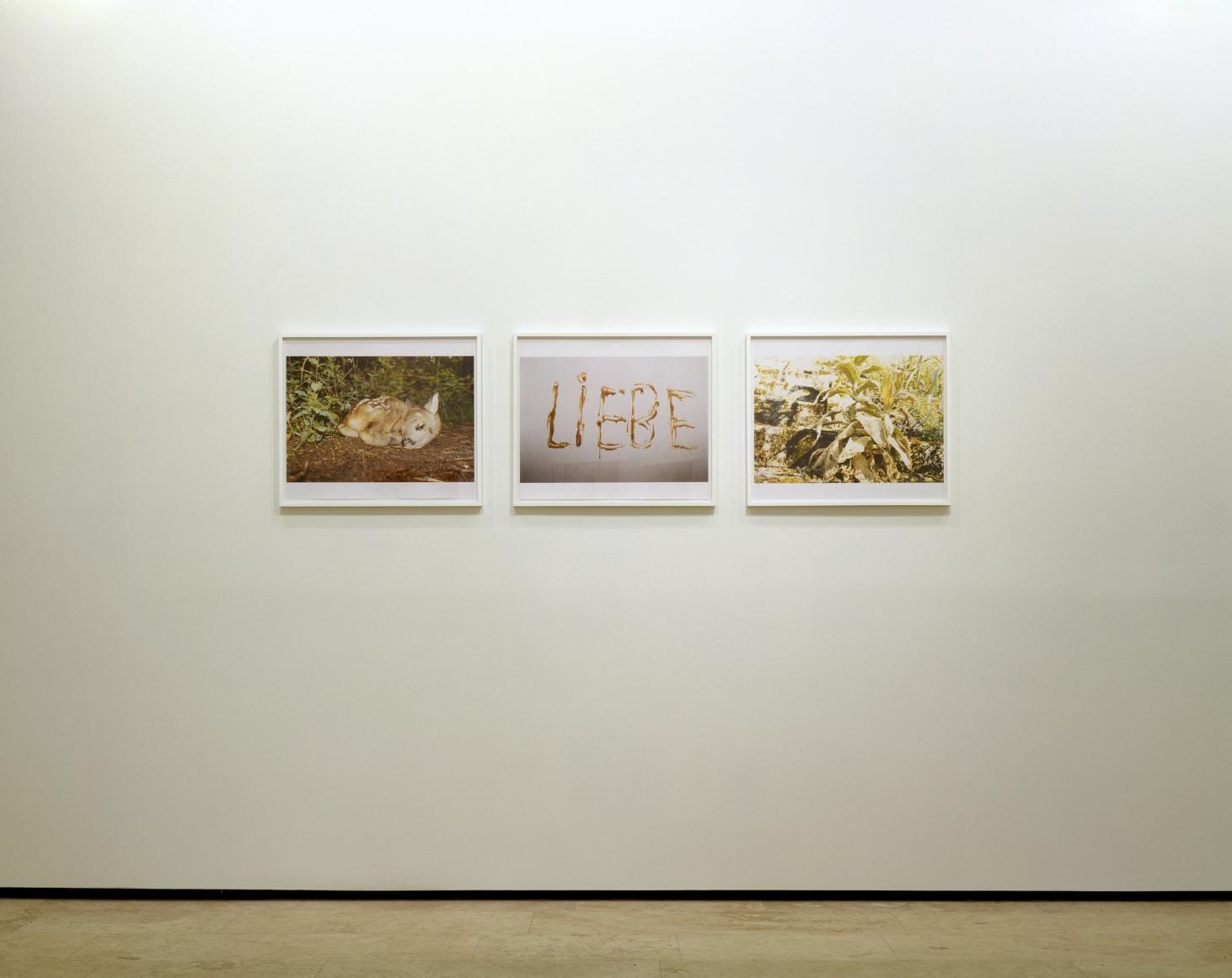 JUERGEN TELLER: NÜRNBERG Installation View 3.