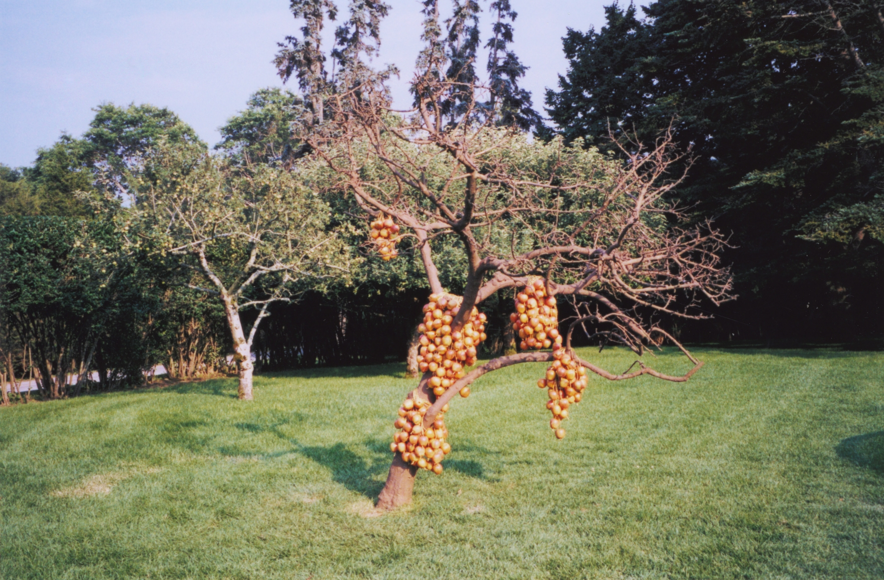 blessed, 2000 cast bronze, 400 bright red ceramic apples, twine