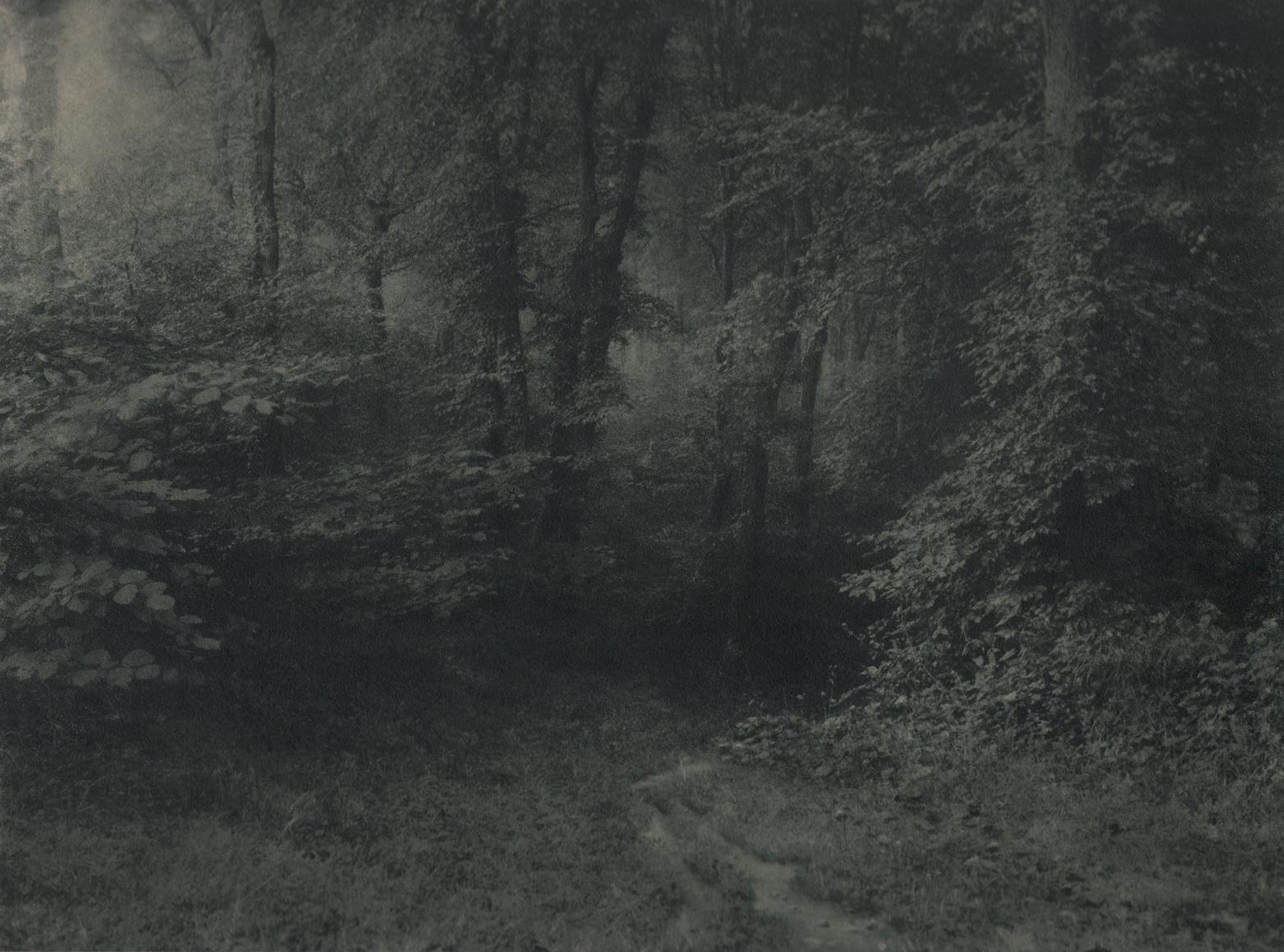 26. Léonard Misonne, Untitled, n.d. Dark, wooded path. Gray/green-toned print.
