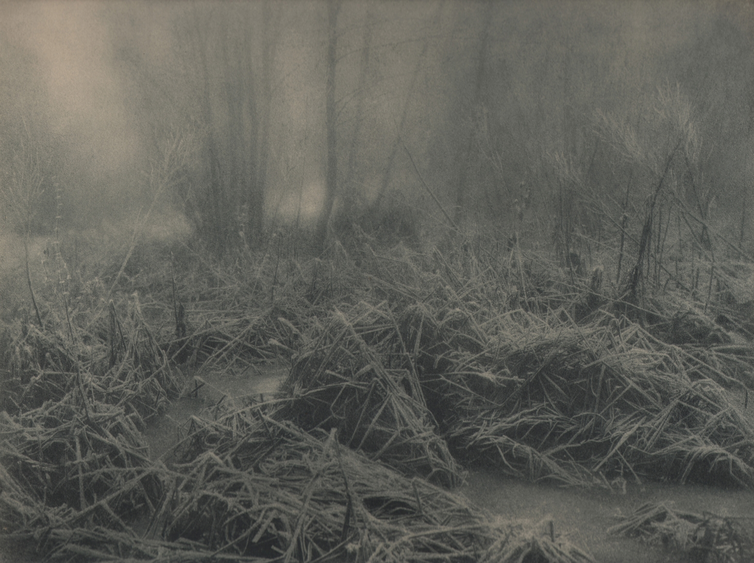 10. Léonard Misonne, Untitled, n.d. Frosted, snowy brush and grass in soft light. Gray/green-toned print.