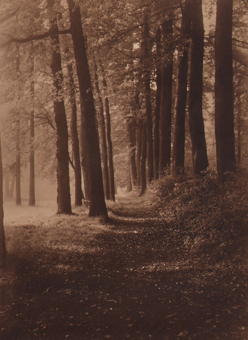 30. Léonard Misonne, Untitled, c. 1930. Wooded dirt path receding away from the viewer. Sepia-toned print.