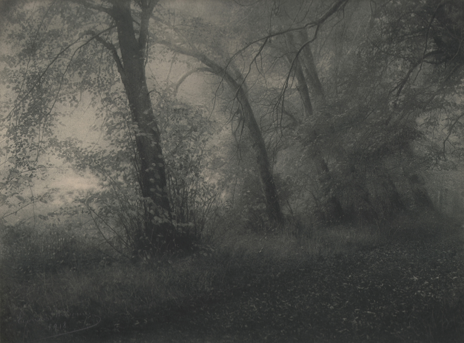 28. Léonard Misonne, Bord de l'etang, 1918. Wooded scene with trees and brush. Gray/green-tinted print.