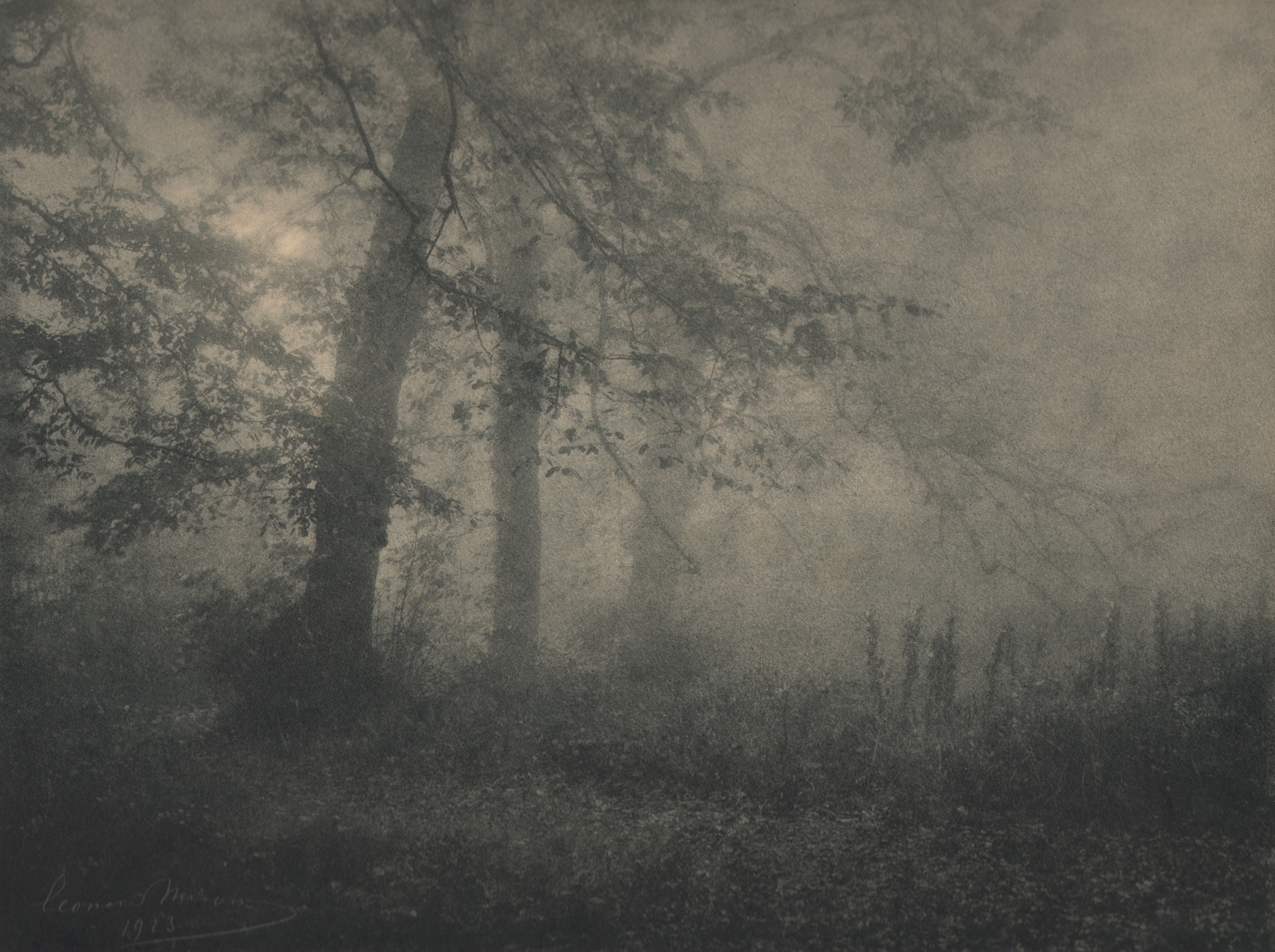 27. Léonard Misonne, Brume, 1923. Trees occupy the left of the frame, low brush on the right. Soft light coming from the left. Gray/green-toned print.