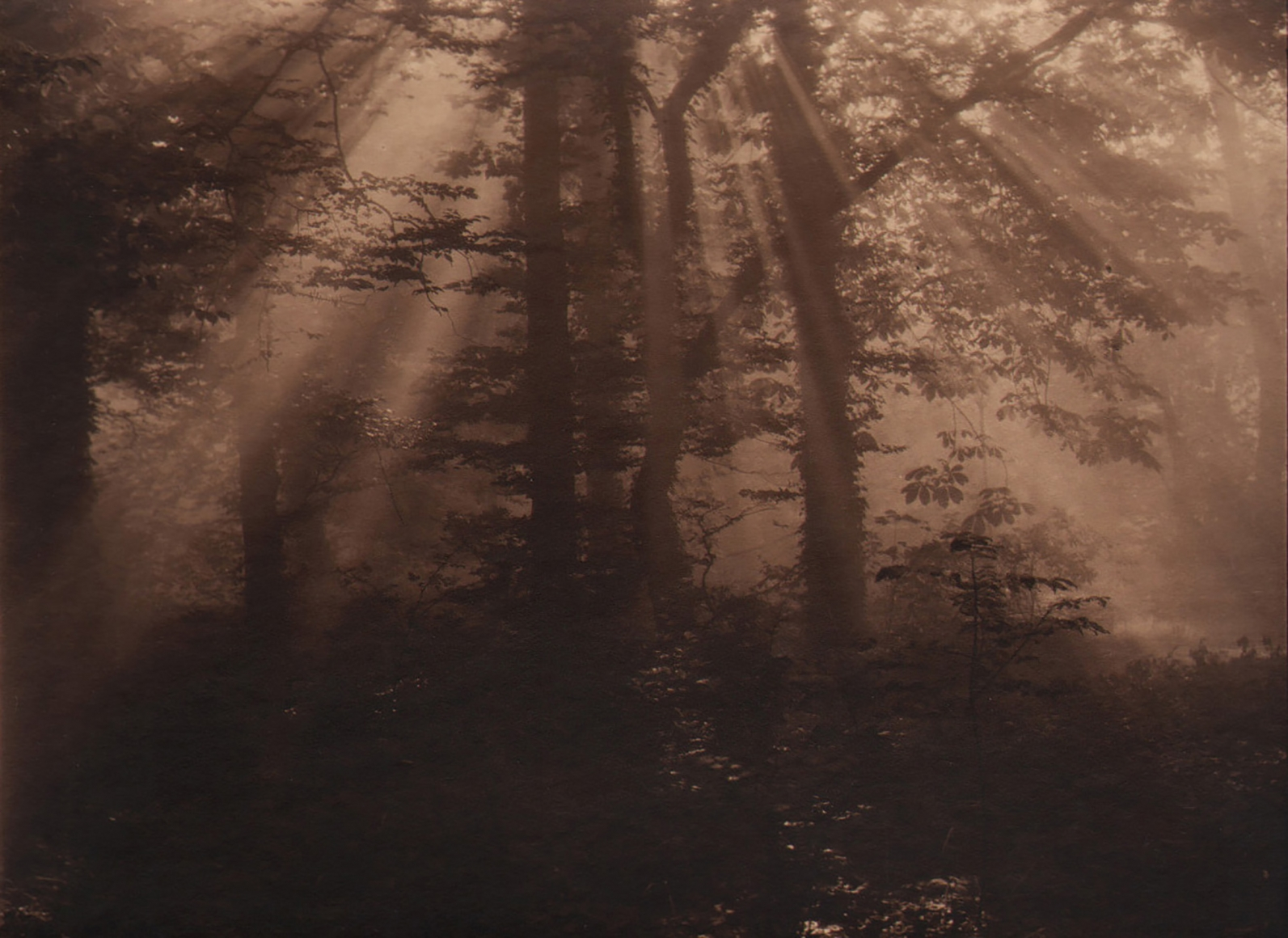 29. Léonard Misonne, Untitled, c. 1930. Wooden scene with sun streaking through from above. Deep sepia-toned print.
