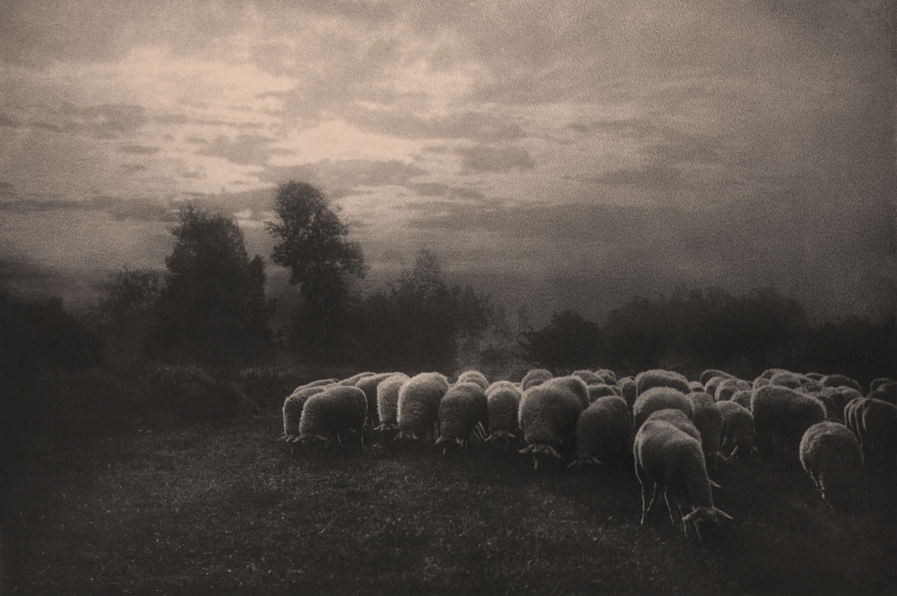 16. Léonard Misonne, Mouton au crèpuscule, 1908. Herd of sheep graze in the foreground against a backdrop of low trees and cloudy sky. Sepia-toned print.