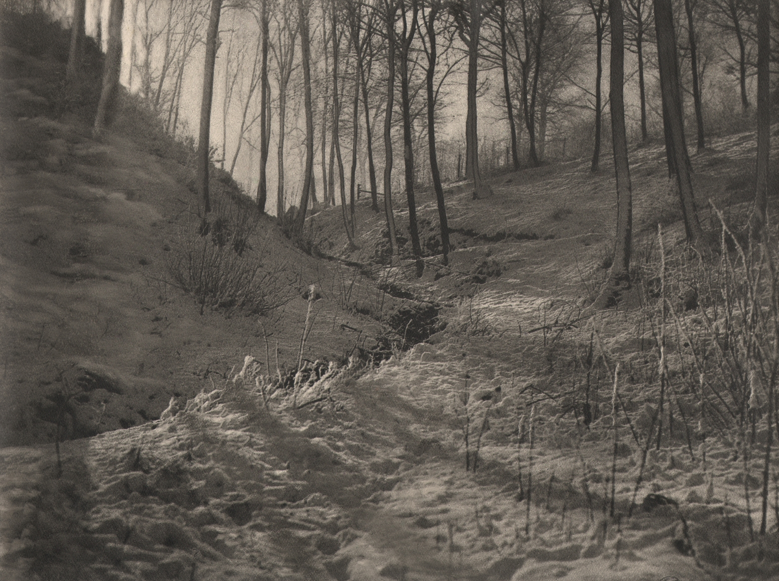 25. Léonard Misonne, [title illegible], 1933. Sun-streaked snowy, wooded hills with thin trees. Sepia-toned print.