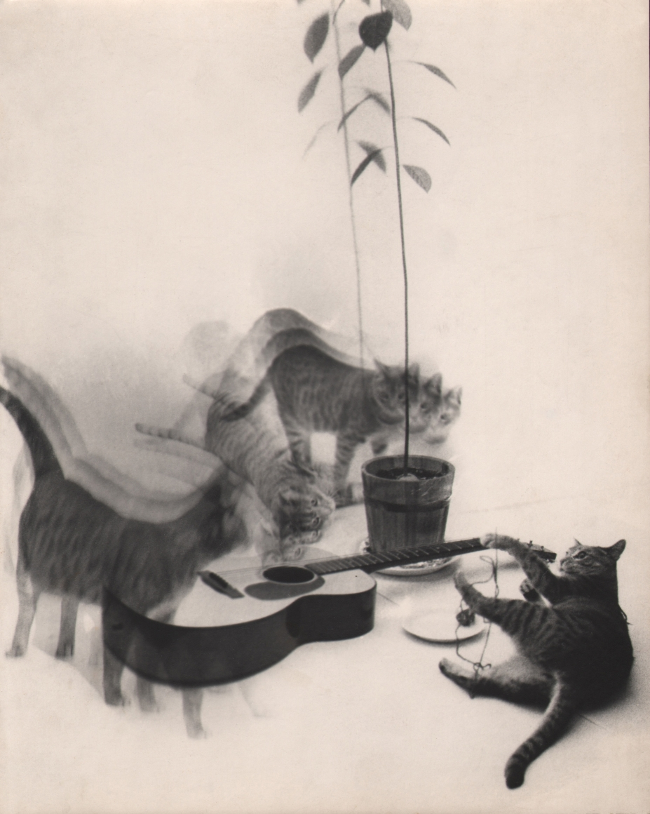 16. David Attie, Breakfast at Tiffany's, 1958. A group of cats, blurred with motion, against a white background, surround a guitar and a potted plant.