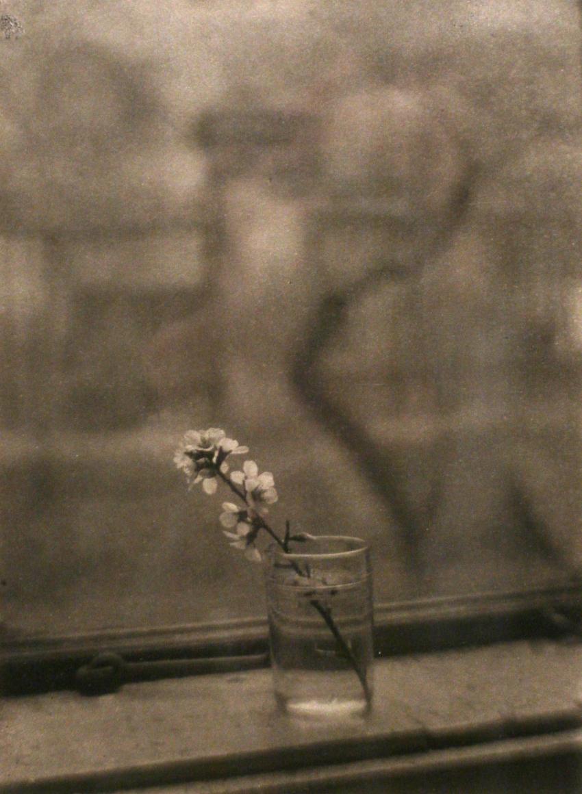 Josef Sudek, Window of my Studio with a Blossom, 1950