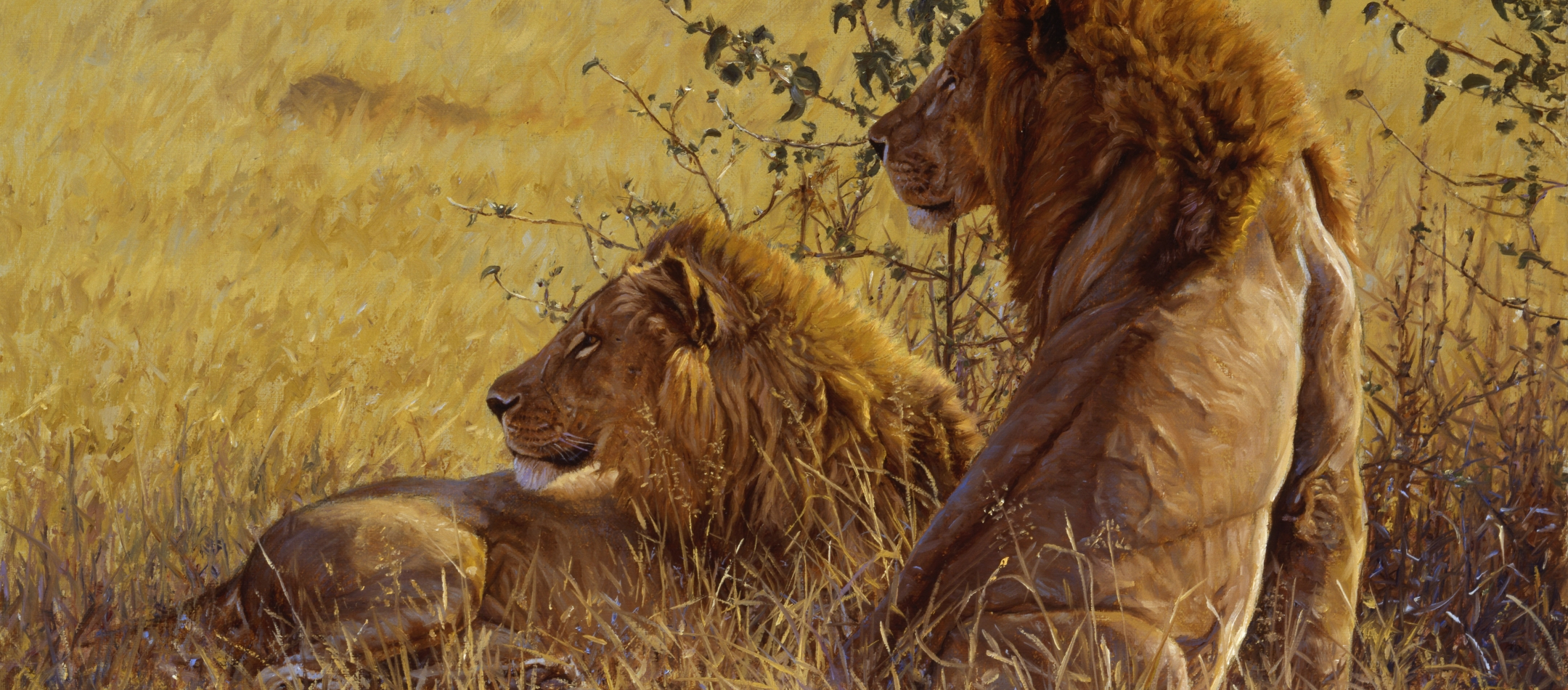 King of Beasts: A Study of the African Lion