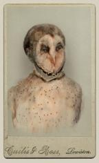 SARA ANGELUCCI | BARN OWL/ENDANGERED | AVIARY | ÉPREUVE CHROMOGÈNE | 22 X 33.5 POUCES | 2013