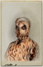 SARA ANGELUCCI | SHORT-EARED OWL/ENDANGERED | ÉPREUVE CHROMOGÈNE | 22 X 33.5 POUCES | 2013