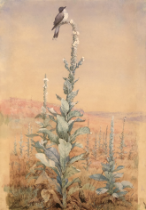 Sold Fidelia Bridges gouache and watercolor painting Summer Song - Kingbird on Verbascum stalk.