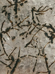 Dove Bradshaw Contingency [Thorns I], 2013