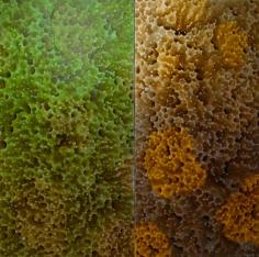 Daniel Orson Ybarra, Serie Constellations: Nebula Sponge
