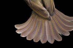 Joel Sartore- The Tail athers of a GFereenbul Bird