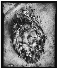 Mark Seliger- Bird