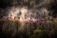 Sam Abell- Forested Hillside