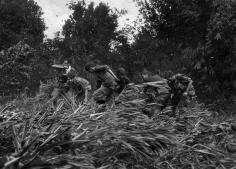 Henri Huet- Life Magazine Photographer Larry Burrows Struggles Through Elephant Grass