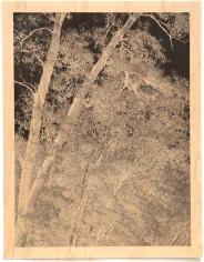 Clifford Ross - Trees I