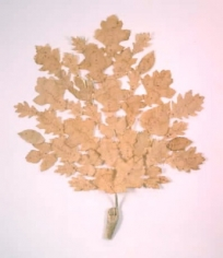 Lesley Dill Leaf Radiance
