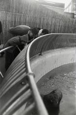 Gary Winogrand - Untitled, 1964 - Howard Greenberg Gallery