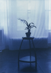 Kenro Izu - Blue #879B, 2002 - Howard Greenberg Gallery