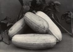 Charles Jones - Vegetable Marrow Long White, c.1900 - Howard Greenberg Gallery