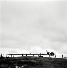 Keith Carter - Rare Breeds Farm, 1998 - Howard Greenberg Gallery