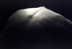 Kenro Izu - Still Life #449, 1993 - Howard Greenberg Gallery