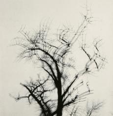Harry Callahan - Multiple Exposure Tree, 1956 - Howard Greenberg Gallery