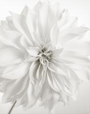 Yumiko Izu - Secret Garden Blanc 114, 2011 - Howard Greenberg Gallery